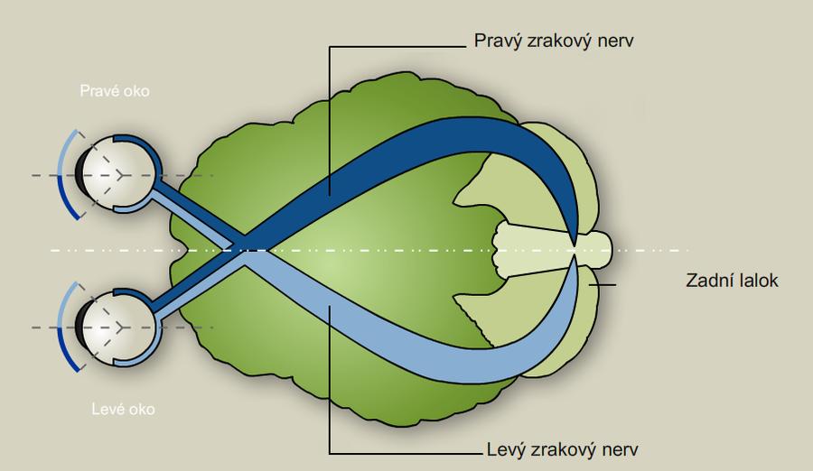 zrakovy_system